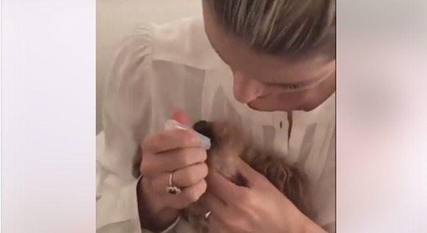 Michelle Hunziker, l'enterogermina al cane Leone: la reazione inaspettata del cucciolo